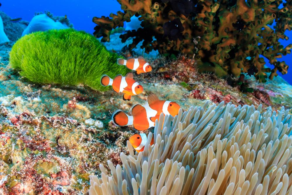 La plongée dans les îles Similan